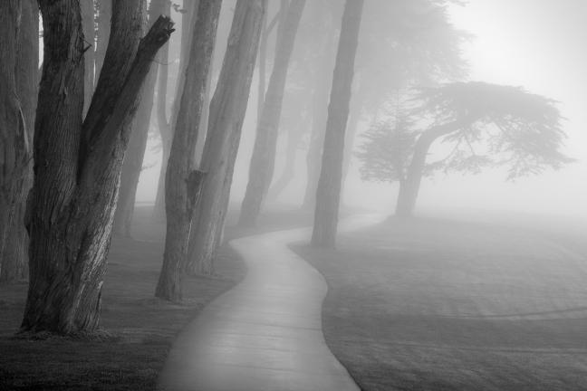 4248111-fog